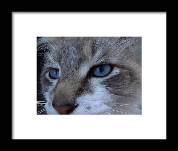 Animal Framed Print featuring the photograph Pensive Look by Lizbeth Bostrom