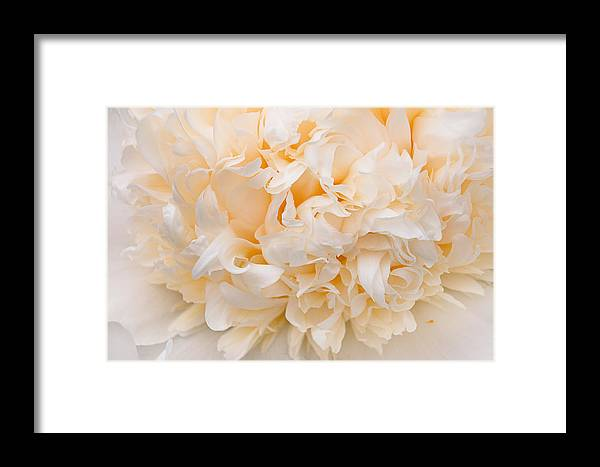 Peony Framed Print featuring the photograph Peony Close-up In Peach by Leda Robertson