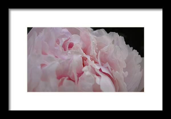 Summer Framed Print featuring the photograph Peony Dreams by Kasey Hynes