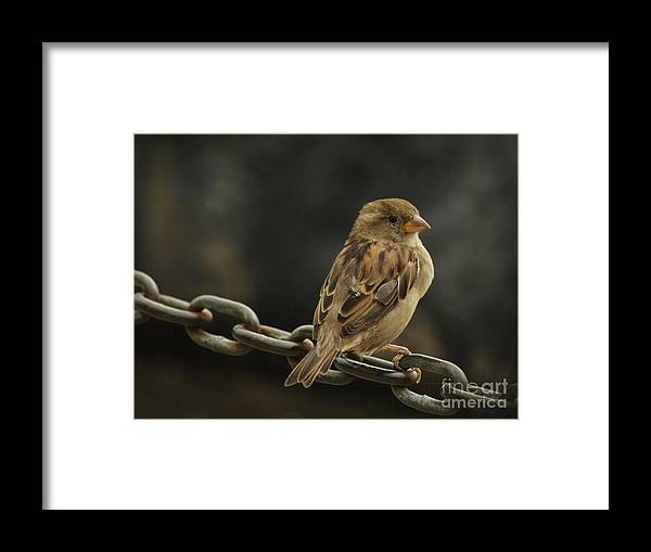 Bird Framed Print featuring the photograph Perched by Margaret Collins