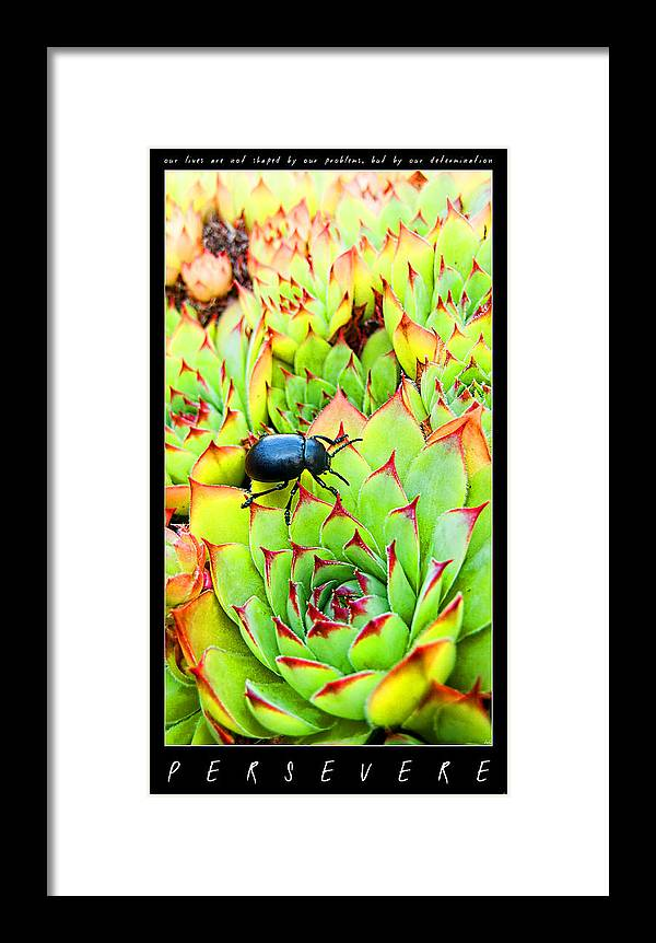 Persevere Framed Print featuring the photograph Persevere I by Weston Westmoreland