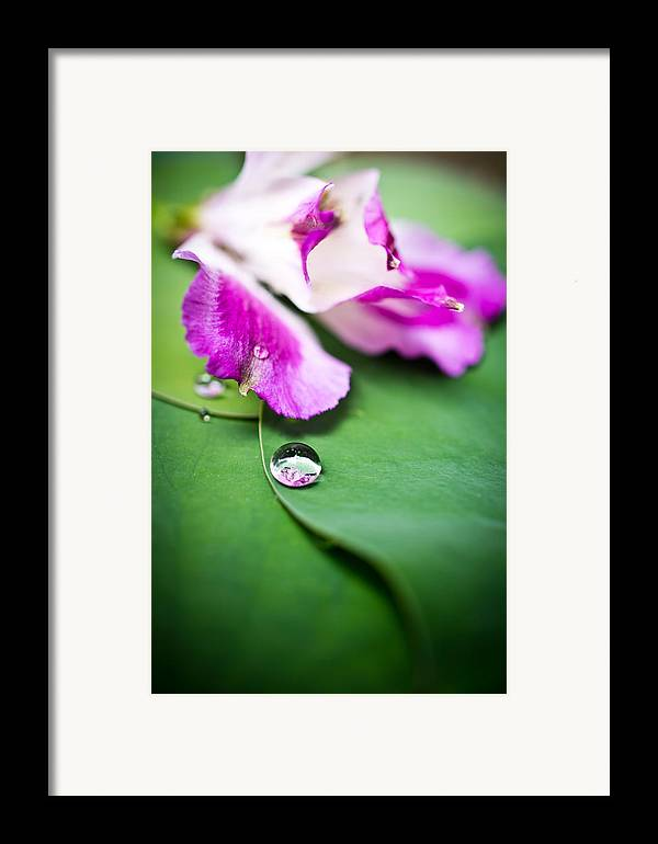 Floral Framed Print featuring the photograph Peruvian Lily Raindrop by Priya Ghose