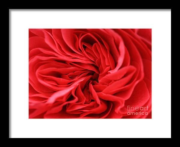 Bloom Framed Print featuring the photograph Petals by Deborah Benbrook