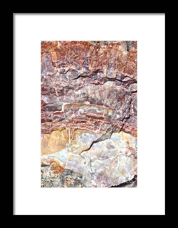 Outdoors Framed Print featuring the photograph Petrified Rings by Susan Herber