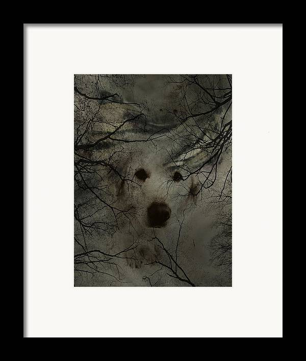 Dog Framed Print featuring the photograph Phantom Dog by Shirley Sirois