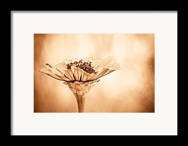 Flower Framed Print featuring the photograph Phillies Need A Win by Trish Tritz