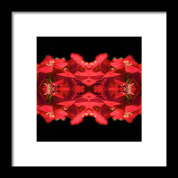 Floral Framed Print featuring the photograph Phlower Phantasy 13 by Sheryl Thomas