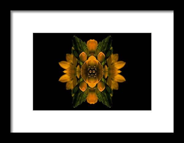 Yellow Flower Framed Print featuring the photograph Phlower Phantasy by Sheryl Thomas
