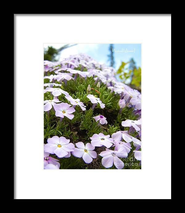 Phlox Framed Print featuring the photograph Phlox by Jamie Johnson