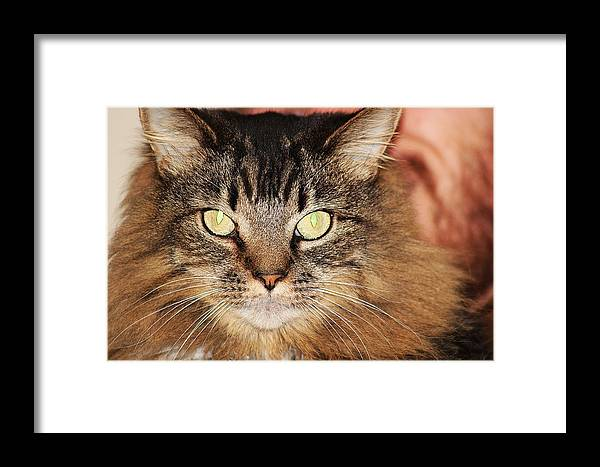 Cat Framed Print featuring the photograph Phoebe by Wayne Toutaint