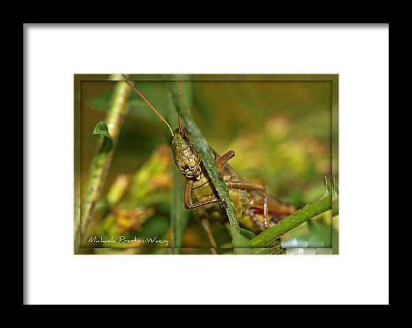 Nature Framed Print featuring the photograph Pick A Boo by Michaela Preston
