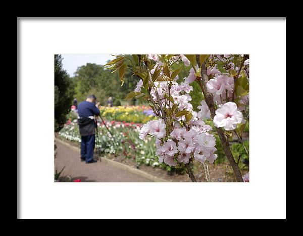 Photographer Framed Print featuring the photograph Pictures In The Garden by Robert Tallman