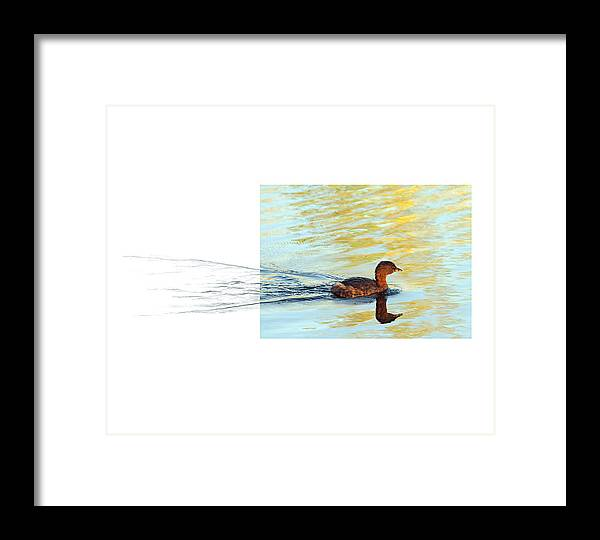Pied-billed Grebe Framed Print featuring the photograph Pied-billed Grebe by Andrew McInnes