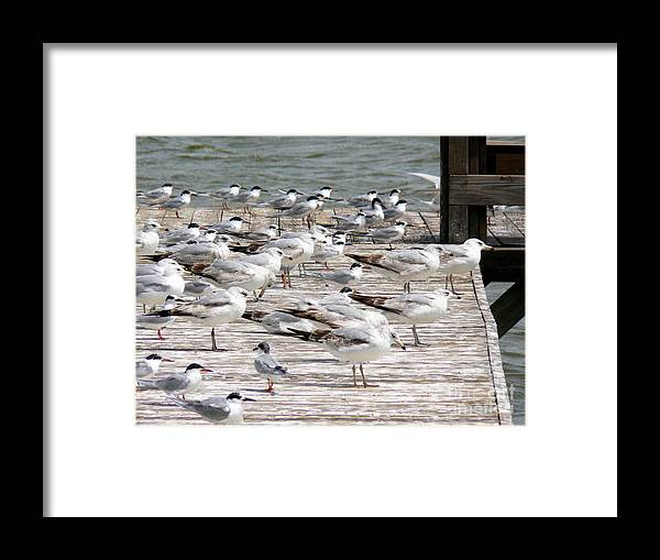 Seagulls Framed Print featuring the photograph Pier Pressure by Elizabeth Fontaine-Barr