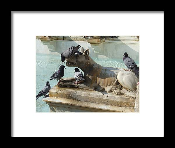 Italy Framed Print featuring the photograph Pigeons And Fountain - Siena by Phil Banks