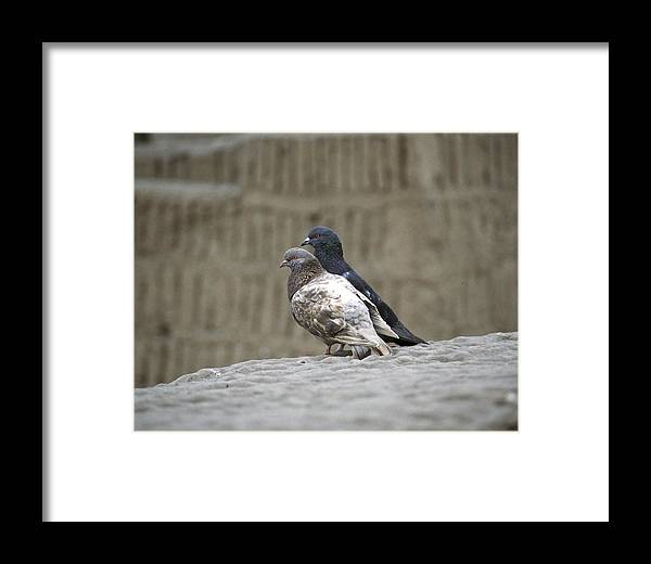 Ina Framed Print featuring the photograph Pigeons At Huaca Pucllana by Jared Bendis