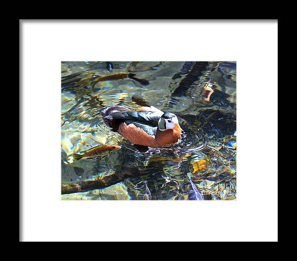 African Framed Print featuring the photograph Pigmy Goose by Carol Bradley