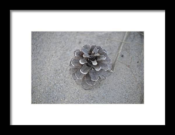 Pine Cone Framed Print featuring the photograph Pine Cone by Jessica Cruz