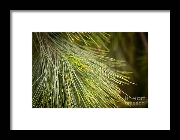 Forest Framed Print featuring the photograph Pine Tree Needles by Tim Hester