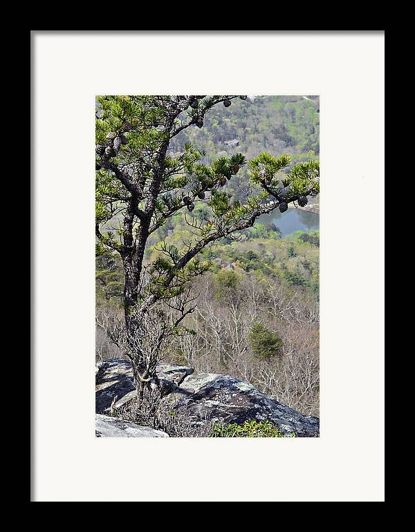 Nature Framed Print featuring the photograph Pine Tree On A Mountain by Susan Leggett