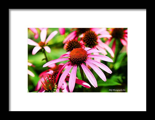 Pink Framed Print featuring the photograph Pink Beauty by Marty Gayler