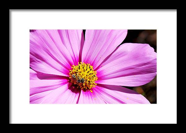 Becky Furgason Framed Print featuring the photograph #pink by Becky Furgason