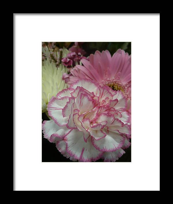 Pink Framed Print featuring the photograph Pink Bouquet by Nicki Bennett