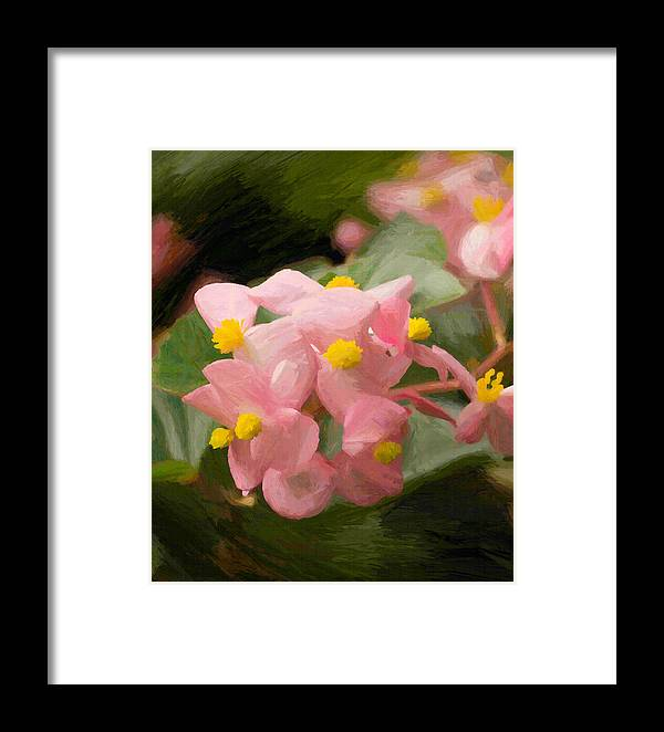 Flower Framed Print featuring the photograph Pink Flowers by Don Schiffner