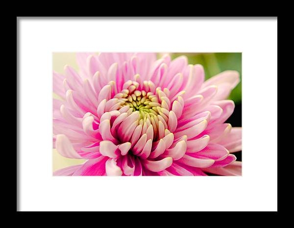 Pink Flower Framed Print featuring the photograph Pink Passion by Dennis Baswell