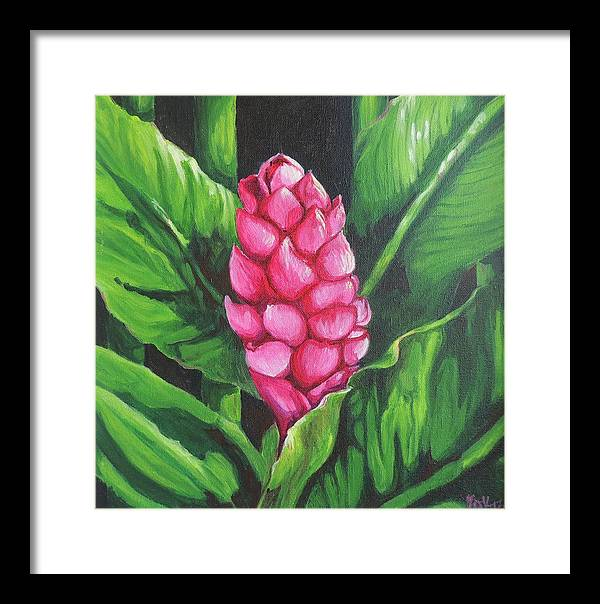 Floral Framed Print featuring the painting Pink Ginger Lily Bloom by Sharon Fox-Mould