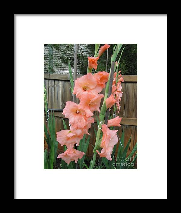 Framed Print featuring the painting Pink Glory by Neil Trapp