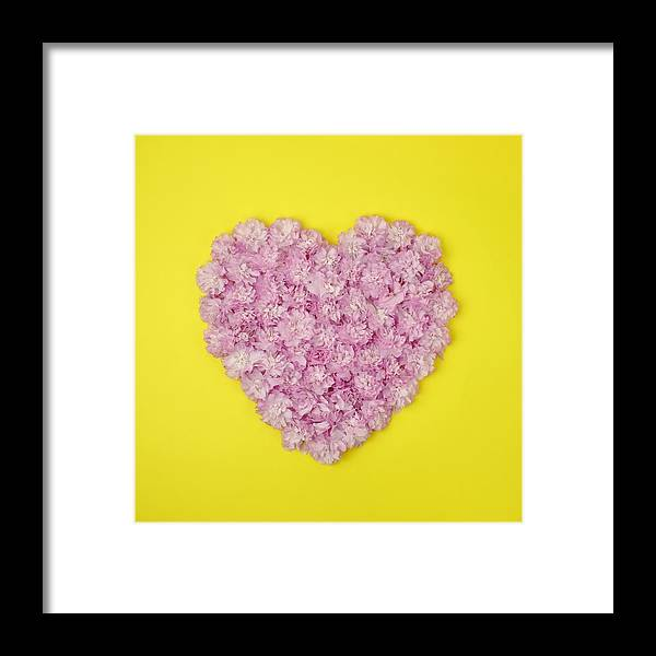 Yellow Framed Print featuring the photograph Pink Kwanzan Cherry Blossoms In The by Juj Winn