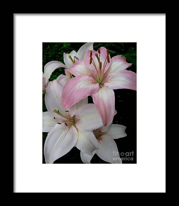 Pink Framed Print featuring the photograph Pink Lily by Nancie Johnson