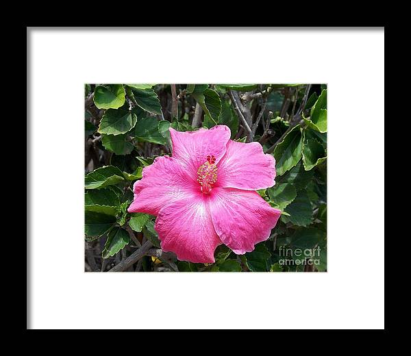 Framed Print featuring the photograph Pink by Mindy Sue Werth