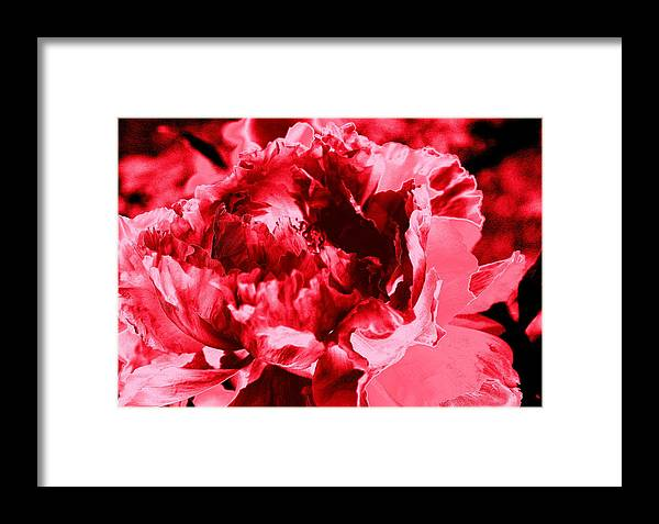 Pink Red Flower Framed Print featuring the digital art Pink Red Flower by Anne Barkley