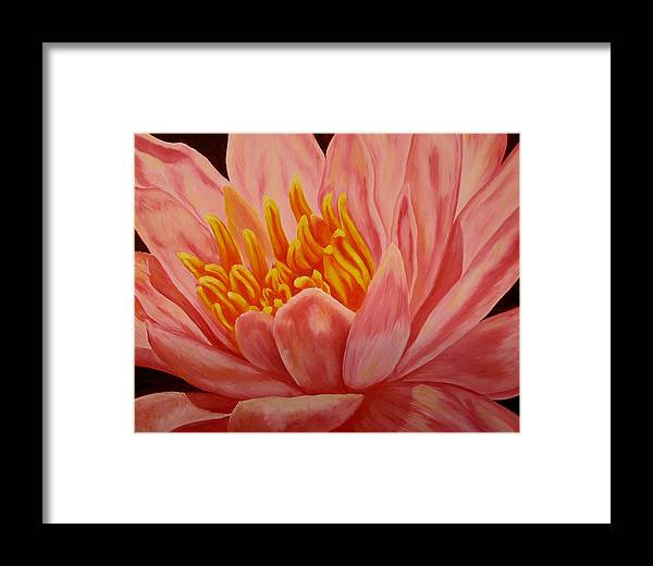 Oil Framed Print featuring the painting Pink Waterlily by Darla Brock