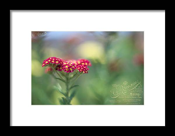 Wildflowers Framed Print featuring the photograph Pink Wildflower by June Marie Sobrito