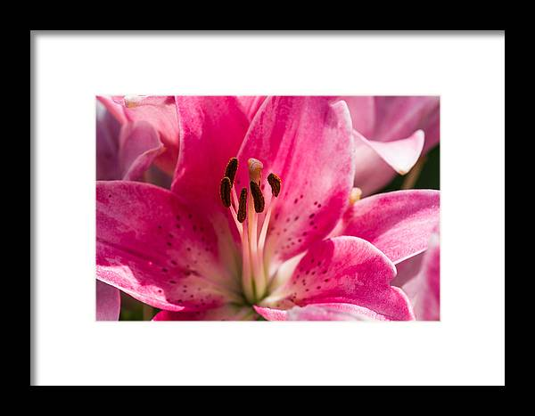 Background Framed Print featuring the photograph Pinky Swear 2 - Featured 3 by Alexander Senin