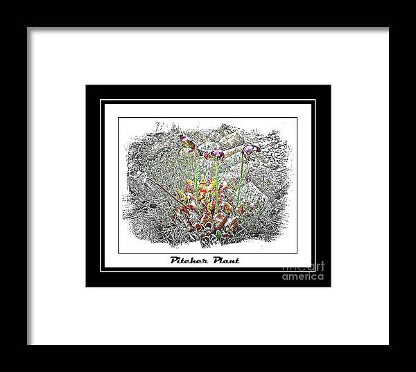 Pitcher Plant Framed Print featuring the photograph Pitcher Plant Illustration by Barbara Griffin