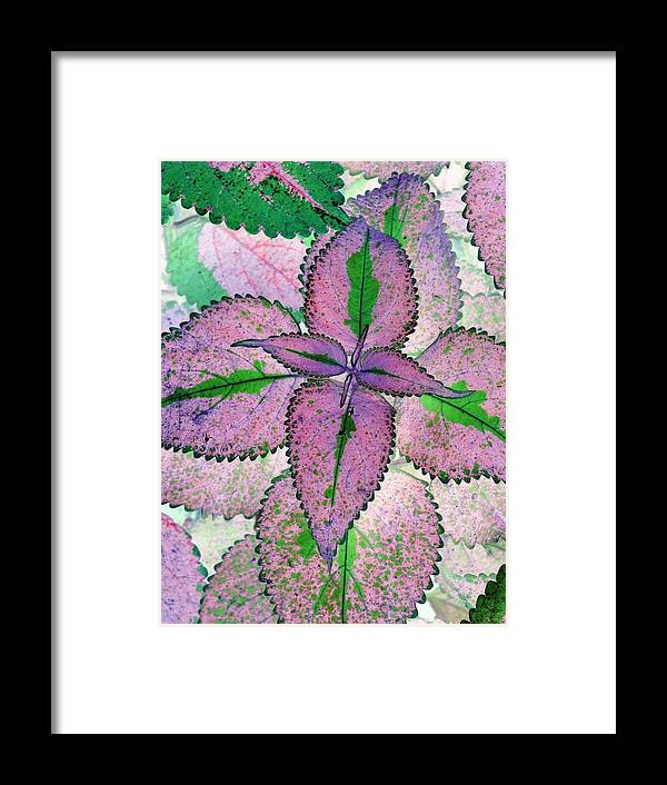 Plants Framed Print featuring the photograph Plant Pattern - Photopower 1212 by Pamela Critchlow