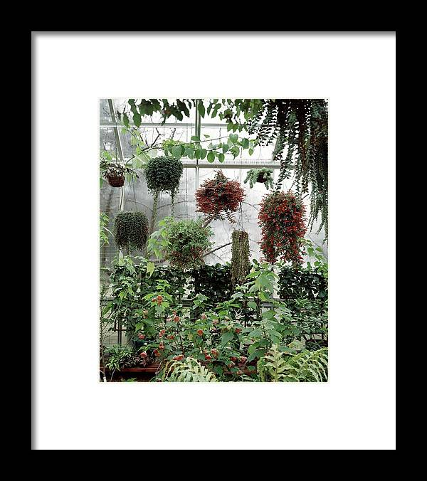 Indoors Framed Print featuring the photograph Plants Hanging In A Greenhouse by Wiliam Grigsby