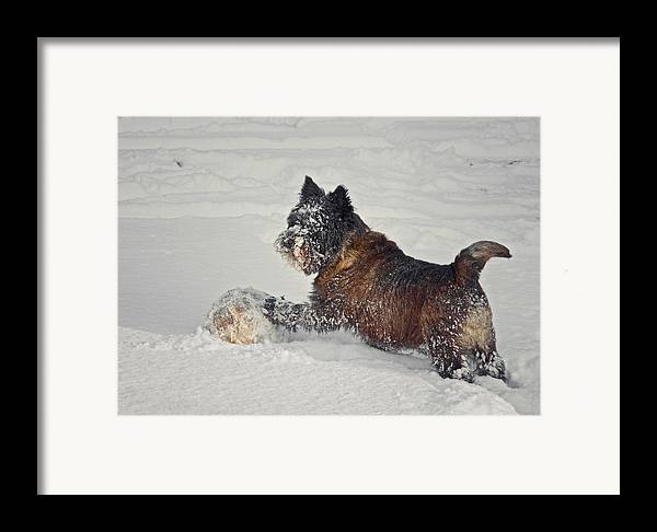 Terrier Framed Print featuring the photograph Play Ball by Odd Jeppesen