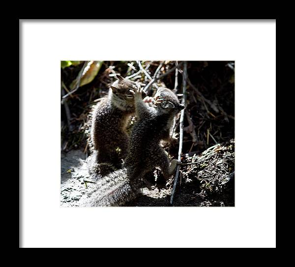 Wildlife Framed Print featuring the photograph Playing U.f.c. by Brian Williamson