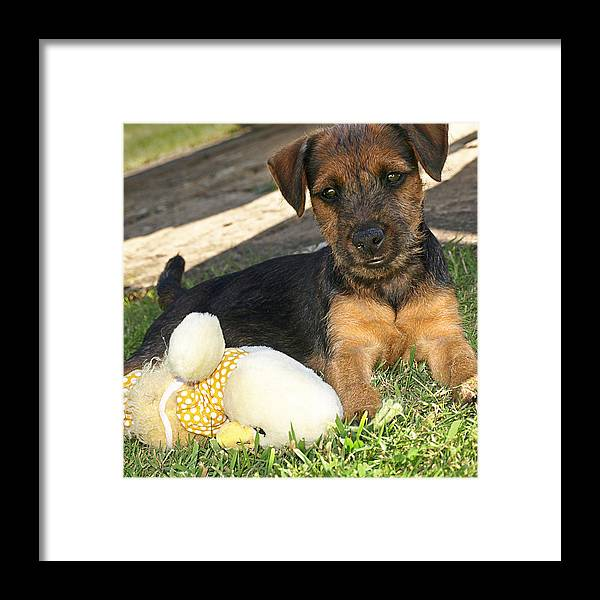 Cute Puppy Framed Print featuring the photograph Playmates - Puppy With Toy by Gill Billington