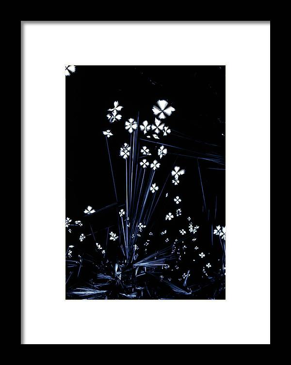 Pantothenic Acid Framed Print featuring the photograph Plm Of Pantothenic Acid Crystals by Sidney Moulds/science Photo Library