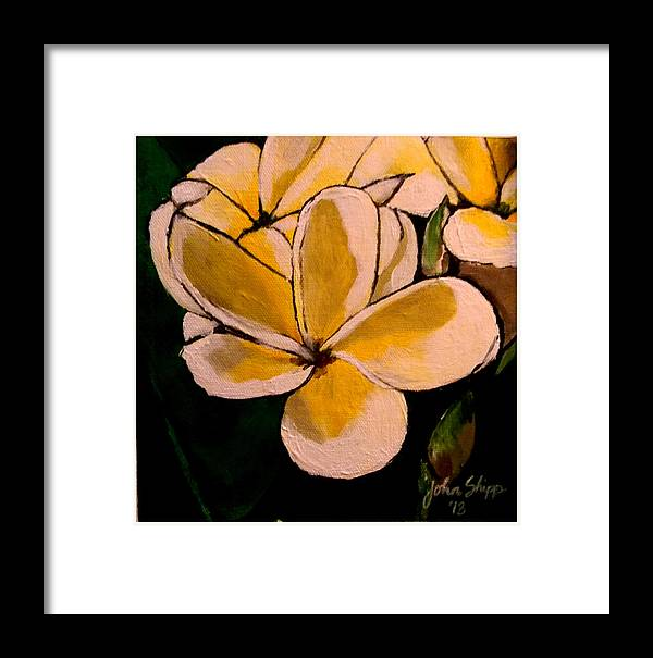 Plumeria Framed Print featuring the painting Plumeria by John Shipp