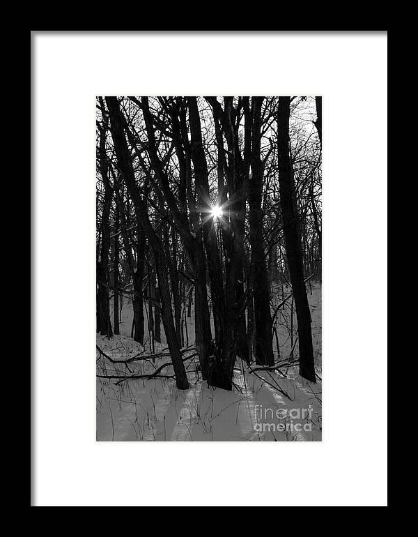 Sun Framed Print featuring the photograph Point Of Light In Black And White by Rick Rauzi