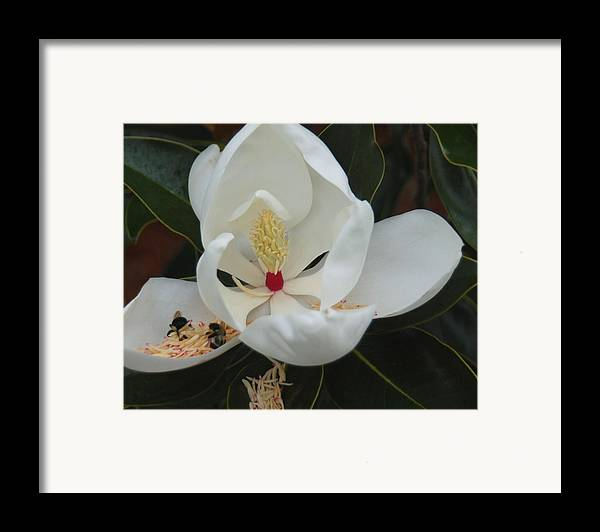 Flower Framed Print featuring the photograph Pollen Party by Suzanne Gaff