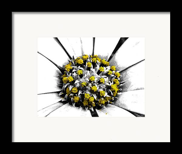 Selective Framed Print featuring the photograph Pollen by Steve Taylor