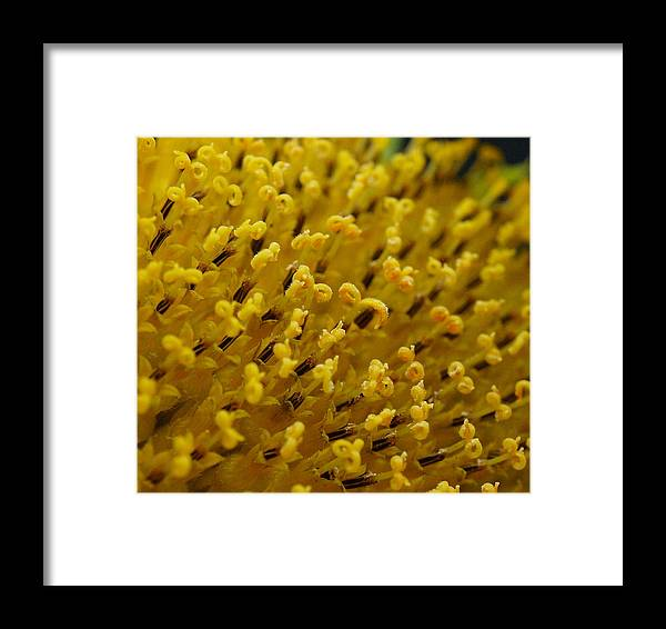 Swflsunsetscenery Framed Print featuring the photograph Pollen by Tracy Barnard